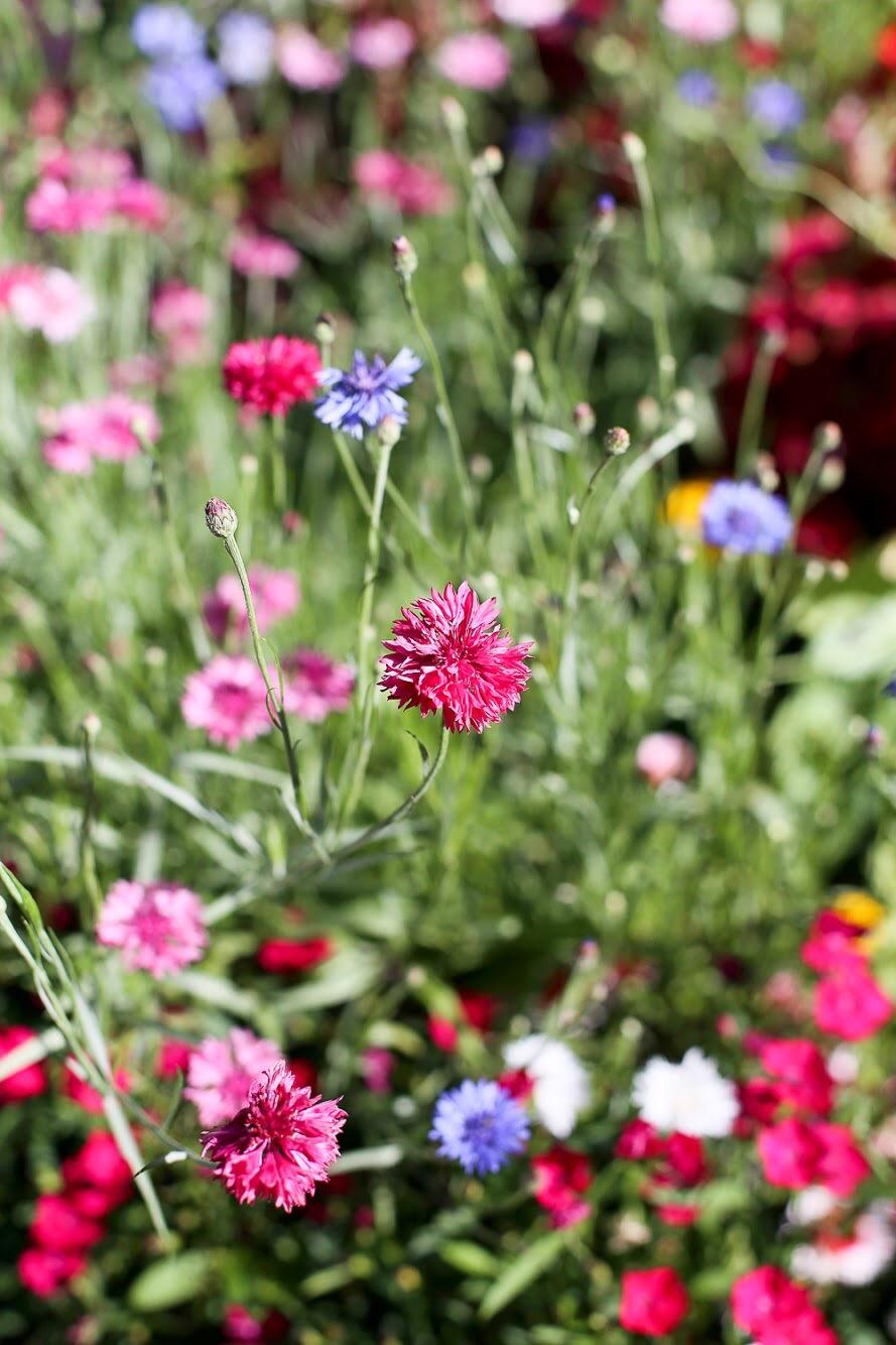 JÄrvenpään Kukkatalo puutarha ja siemenet