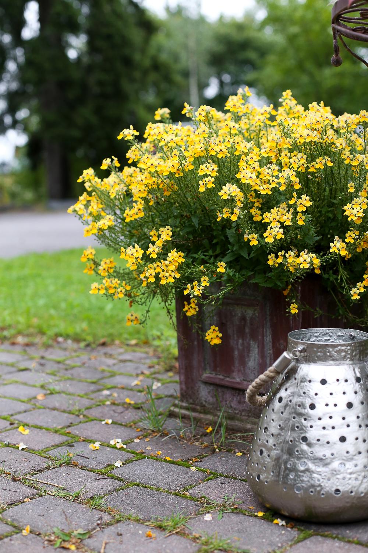 kranssin tekeminen kukkakurssi sidontakurssi kukkakoulu syystyöt puutarhassa