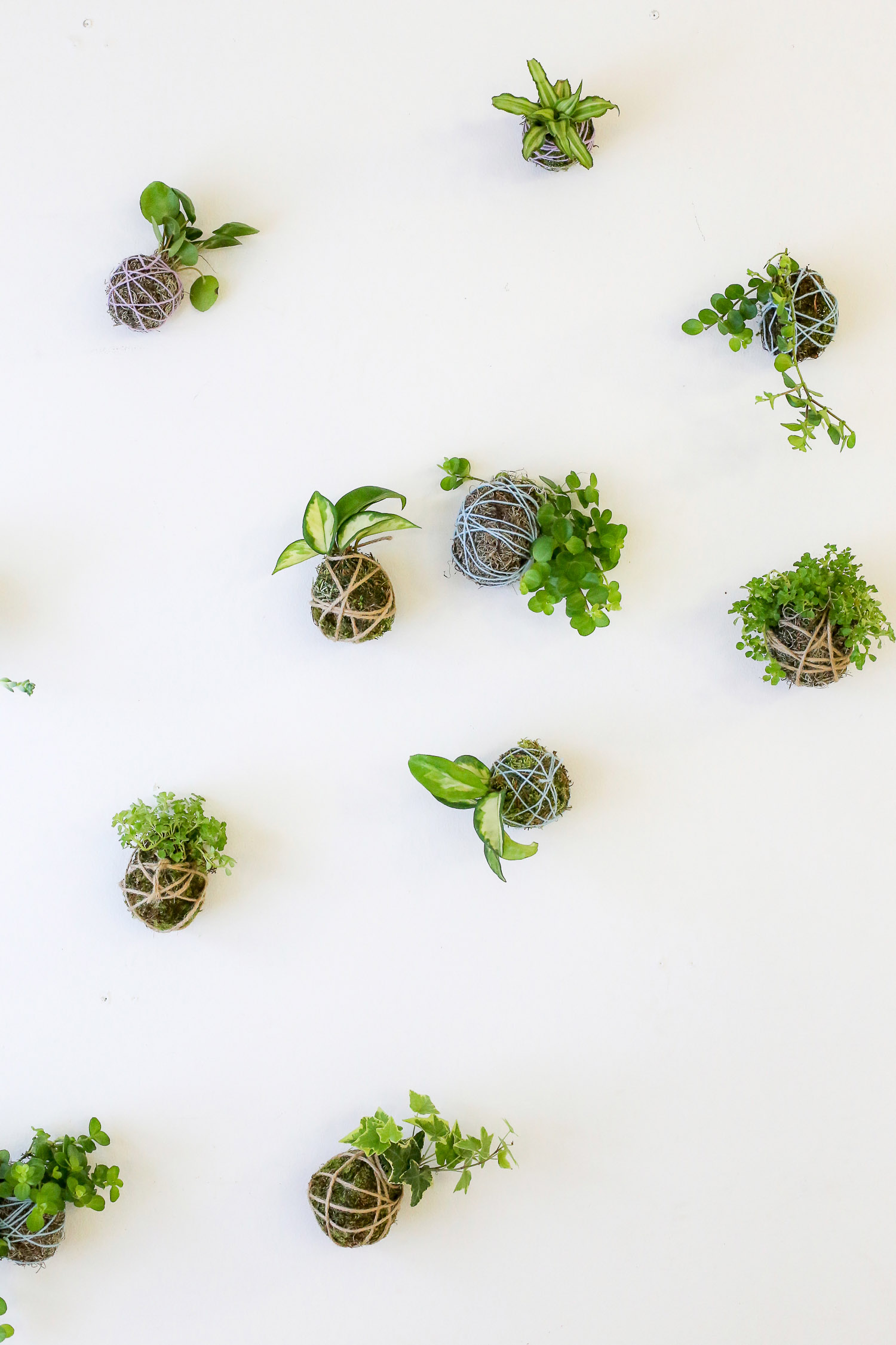 Kokedamapallot on tehty viherkasveista sammaleesta ja narusta. Kukkasidontakursseillamme eli kukkakoulussamme voit opetella tekemään näitä ihania sisustuksellisia kukkapalloja.