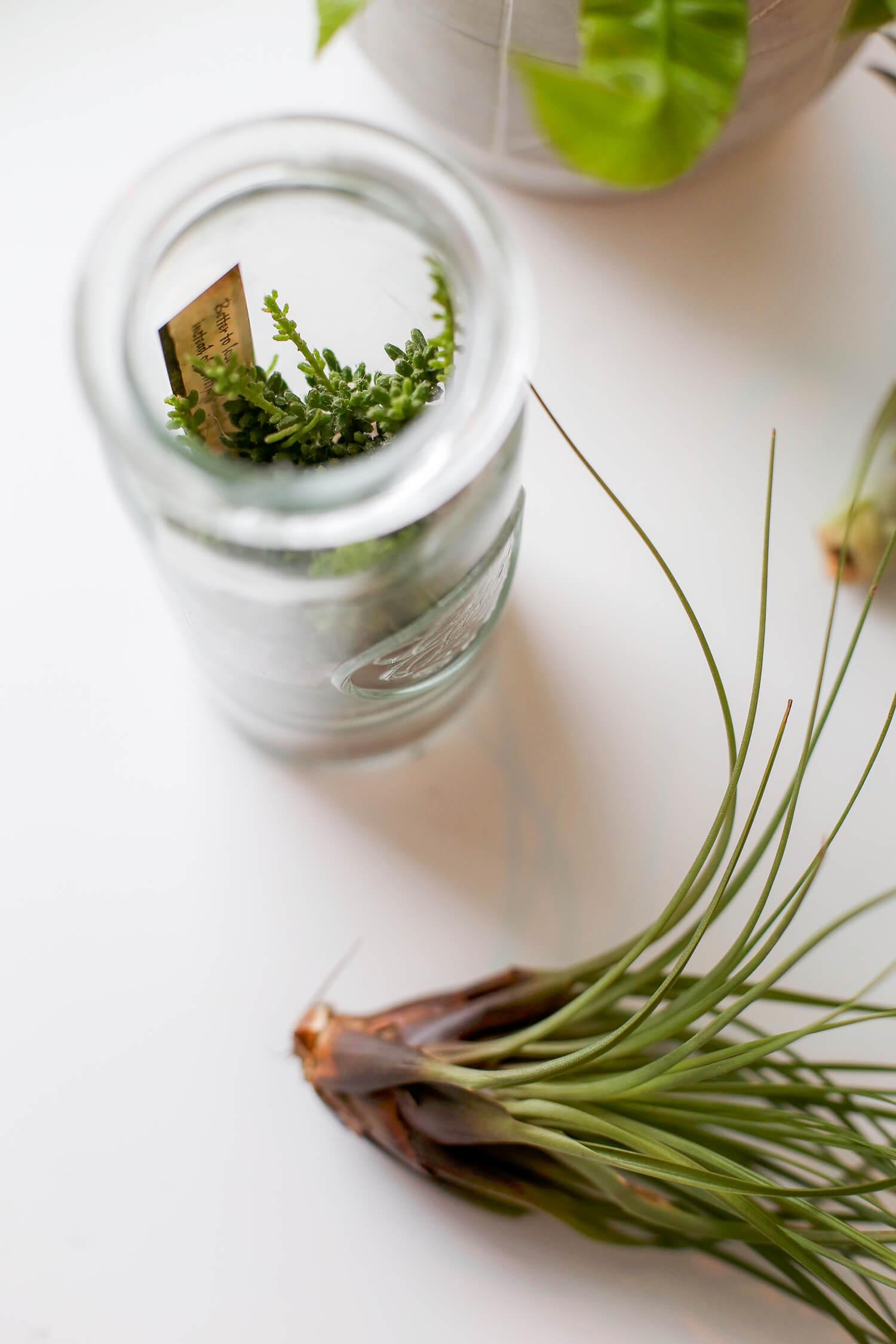 Lasiruukussa sisällä oleva kasvi ei paljon tarvitse kastelua, niinkuin ei pieni ilmakasvikaan. Ilmakasvin voi upottaa veteen kerran pari kuussa.