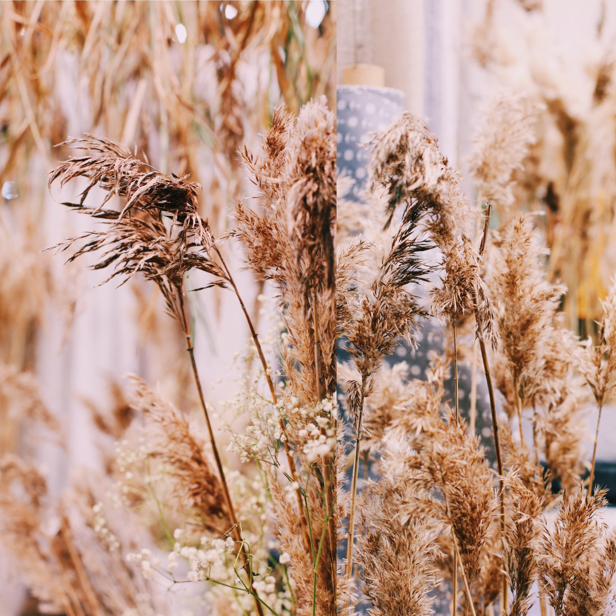 Heinät heinät, hurmaaavat edelleen keväänkiin korvalla. Luonnosta tai kukkakaupasta.