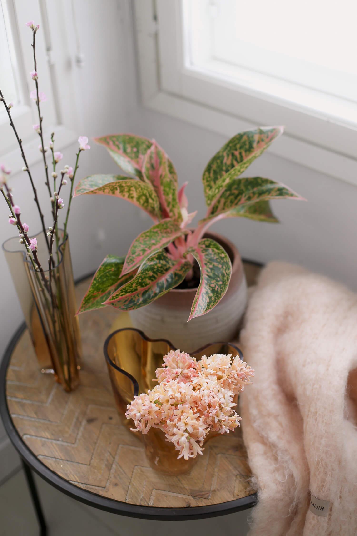 Eteisn pikkupöydällä on ilmaapuhdistava laikkuvehka sekä kahdessa aaltomaljakossa kukkai, toisessa persikan värisiä hyasintteja ja vaaleanpunaisia kirsikanoksia
