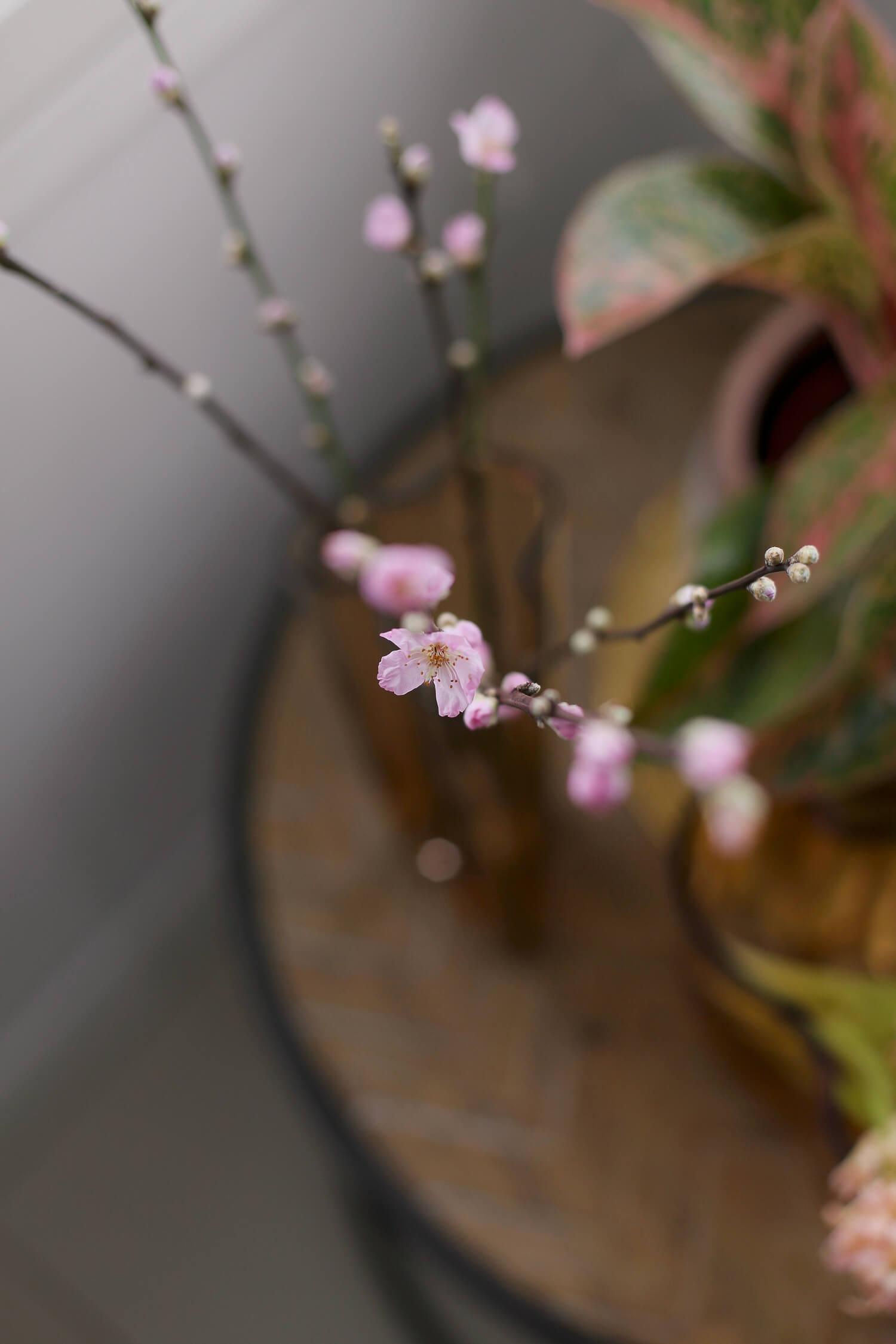 ihana vaaleanpunainen kukkiva kirsikanoksa aalromaljakossa
