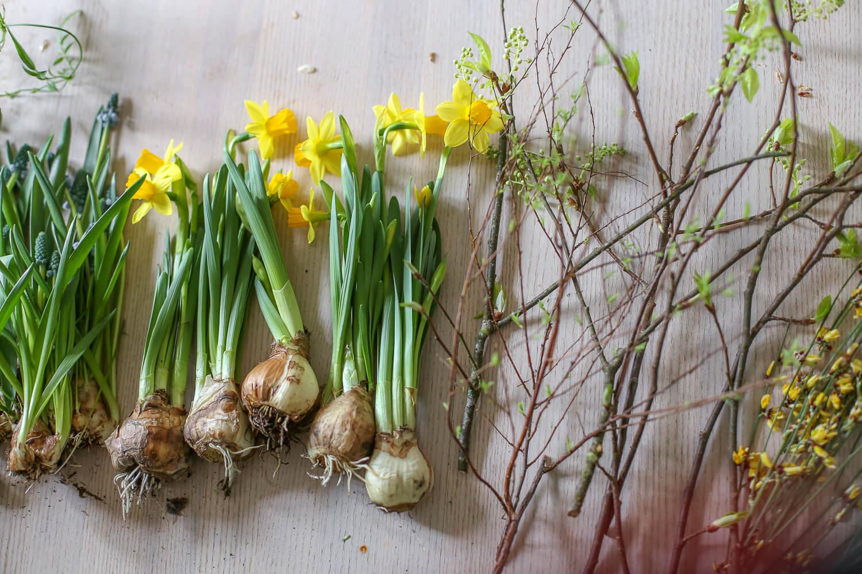 Pääsiäiskimpun ainekset ovat sipulikukat; narsissi sekä helmillja ja oksat ulkoa puutarhasta, joissa on pieni silmu.