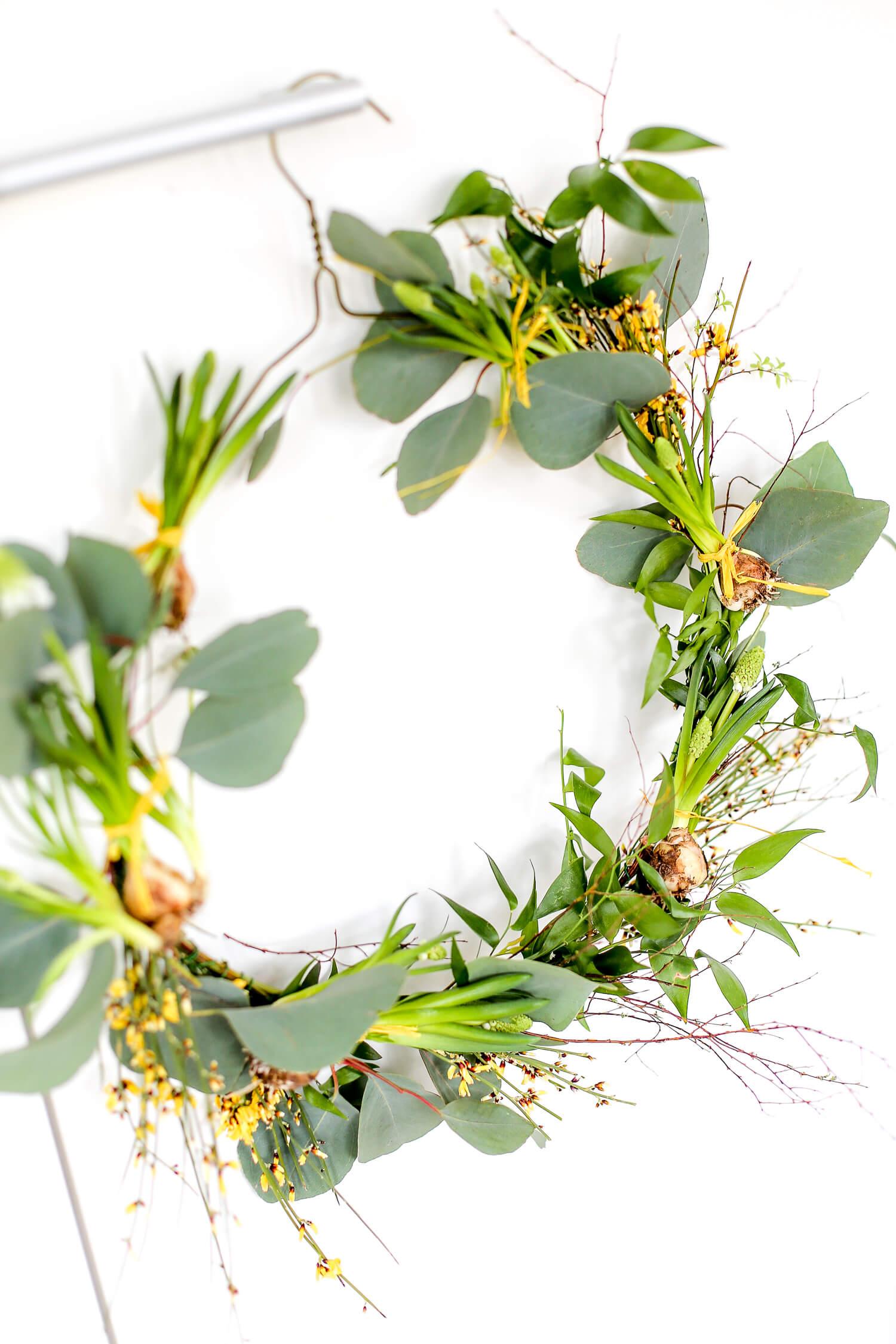 Pääsiäskranssi on sidottu henkarin ympärille eukalyptuksesta, ginstiasta ja erilaisista sipulikukista.