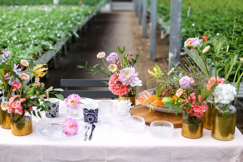 Pöytä on katettu leikkokukkien kanssa kasvihuoneeseen. Kukka-asetelmassa on vihreää ja vaaleanpunaista sekä lohenpunaista pelargoniaa.