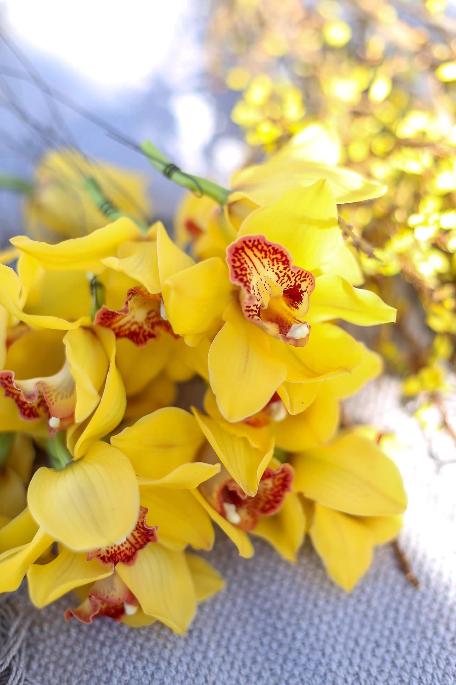 Keltaiset orkidean kellot on langoitettu rautalangalla vartensa päästä.