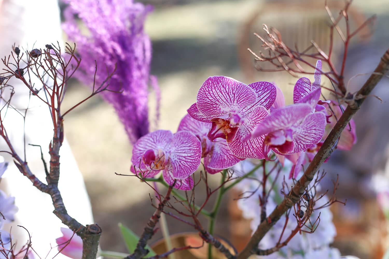 Ruukkuorkidean kukinto on käytetty leikkokukkana maljakossa.