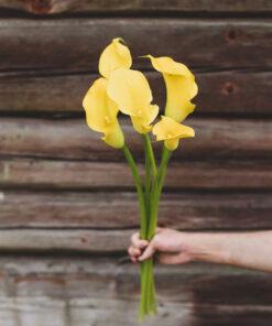 Kalla keltainen